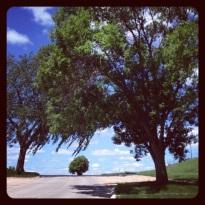 summertree