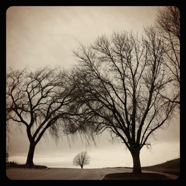 tree7.14